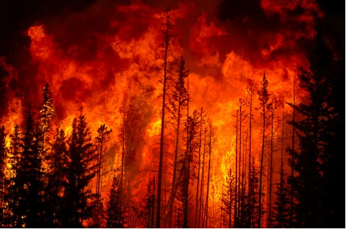 One third of the earth's vegetation is destroyed.