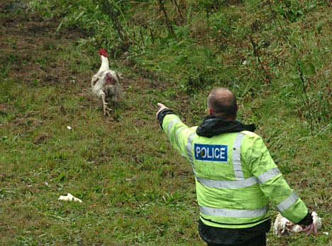Well, well, well.  It seems Dave and I aren't the only ones that like to chase turkeys.  Can we join you Officer Smith???
