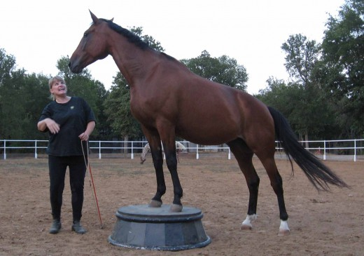 Me with my adopted Standardbred mare, Miss B...