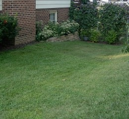 This side yard was just a pass through to the backyard a few years ago.