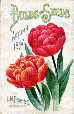 Flower seed catalog cross stitch chart