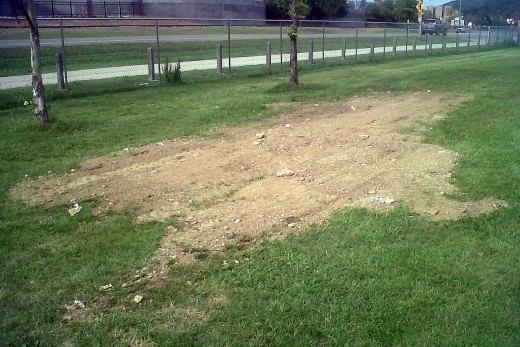 I spread some dirt over the yard at work to fill in some ruts and smooth it out a bit.