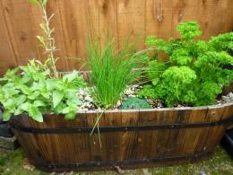 Herb gardening on large pots