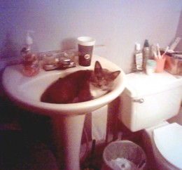 Our Bootsie demonstrates the feline-approved use for bathroom sinks.