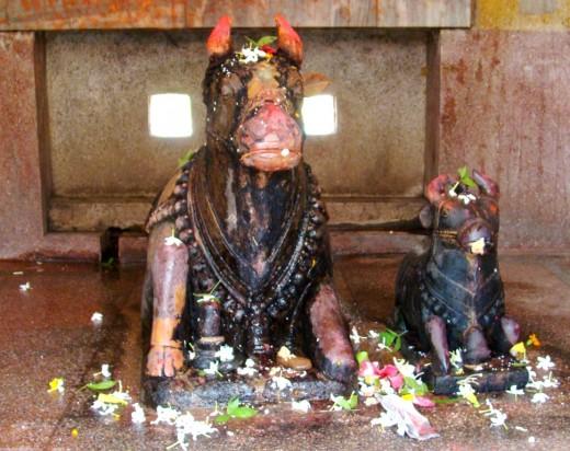 Two idols of Nandi the holy Bull