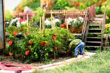An O scale gardener using his tiny green thumb to produce a beautiful bounty of veggies.