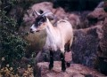 How to make Goat's milk soap?