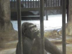 Lonely Gorillas