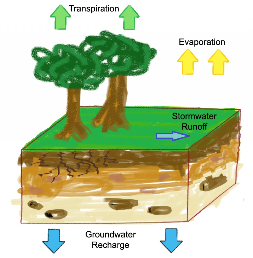 The Hydrologic Cycle: Water Evaporation and Transpiration ...