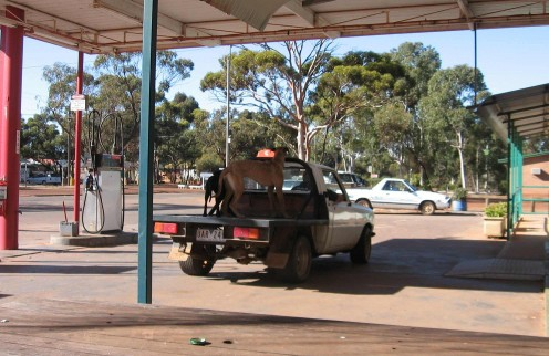 Hang around the Corrigin servo long enough and you will see dogs in a ute (or on a flatbed)