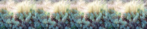 Ice Plant & Grasses - Southern California Theme