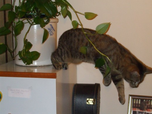 Kitten trying to take the plant with him as he runs from our scolding!