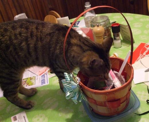 Kitten sniffs around in a human's Easter basket.