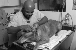 Veterinary Technologist