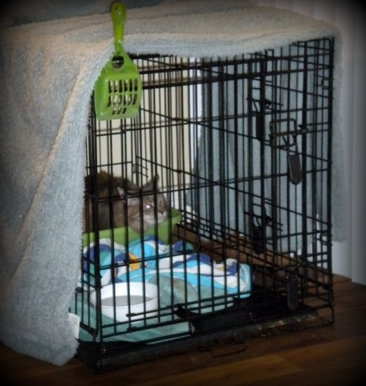 Cage set-up - Note that it is covered to offer privacy to the cat.