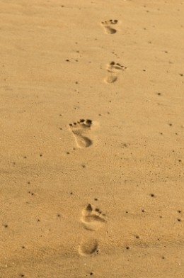 Image: Arvind Balaraman / FreeDigitalPhotos.net
