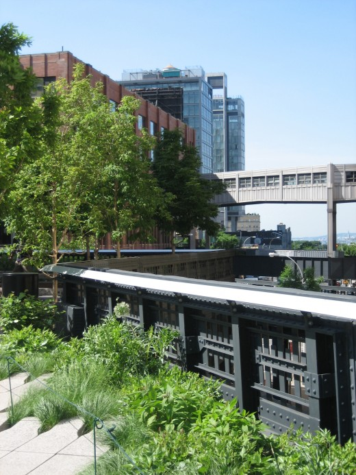 New York's High Line Park is in full bloom in late May