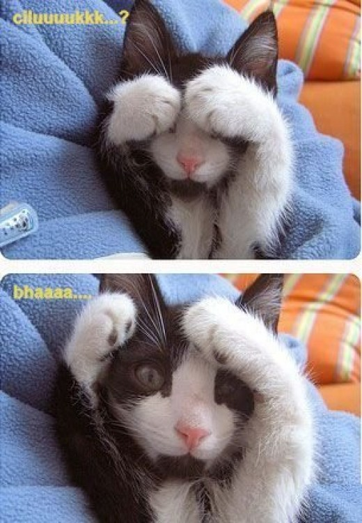 Peek a boo! Oh, come on! Will you give me a little smile?