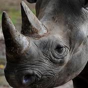 Gaming Rhinoceros profile image