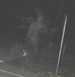Devil's Den Webcam Shot