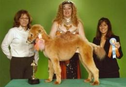Is it a poodle, or is it a petite lap camel...?