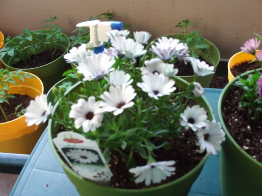 Small containers allow anyone to enjoy flowers in their own backyard, even if it is a small one.