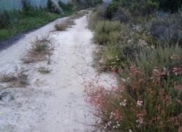 Old El Camino Real