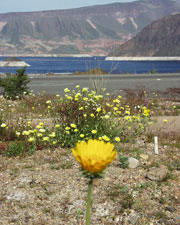 Native plants and flowers at Lake Mead
