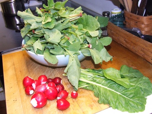 Radish, Radish Tops and Swiss Chard