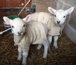 I don't think these two got eaten cause of their sweaters.