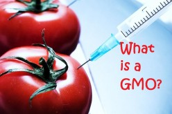 What is a GMO Food?