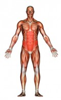 Core Muscle Strength and Trunk Stability Development for Cyclists