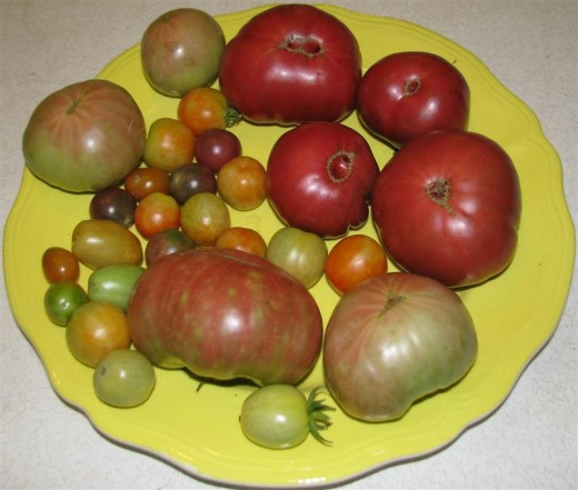 The large ones are Black Krim and the others are cherry and grape tomatoes.