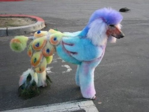 PLEASE, help us save poodles from eyesore dye jobs today!