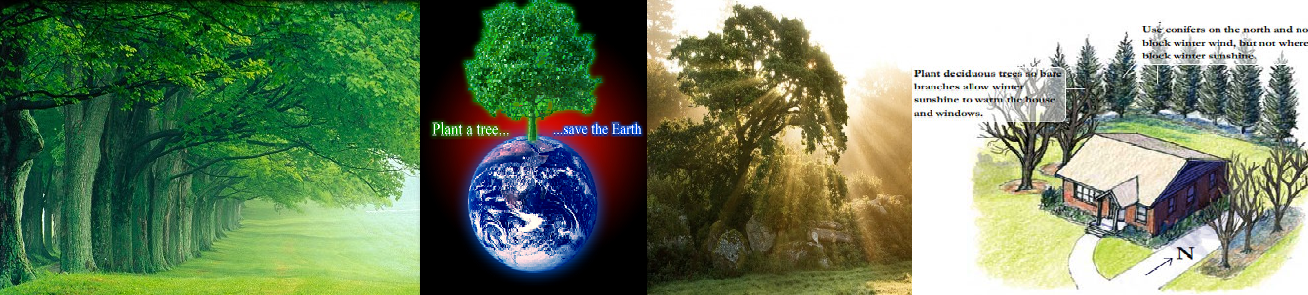 planting of trees essay Plants and humans are perhaps the most important organisms, however, us humans, have caused the death of thousands of plants by starting fires and by cutting down trees for things such as paper and furniture.