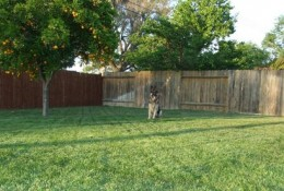 Dogs love large spaces and the outdoors