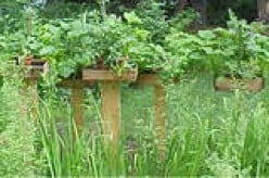 Planting an Organic Garden? Go Vertical. Plant Recommendations & Pests
