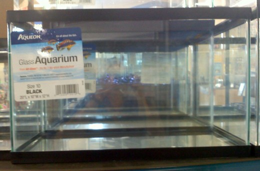 A glass aquarium makes a great hamster home!