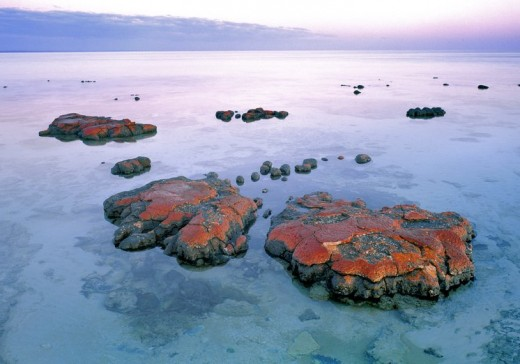 Stomatalites found on the west coast of Australia are among the oldest forms of life. They once lived in a methane atmosphere and excrete oxygen as a waste product.