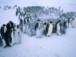 "Penguins are a complex life extremophile. They endure conditions that would kill an average human in minutes. They raise their young in an impossible environment. Check the movie ""March of the Penguins""."