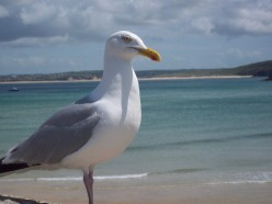 Photo's St. Ives, Cornwall