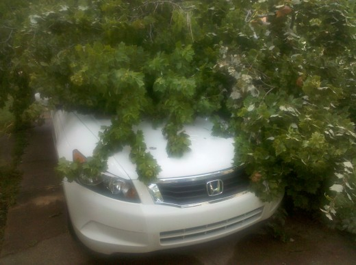 Honda is okay but is the homeowner responsible for a tree that belongs to someone else?