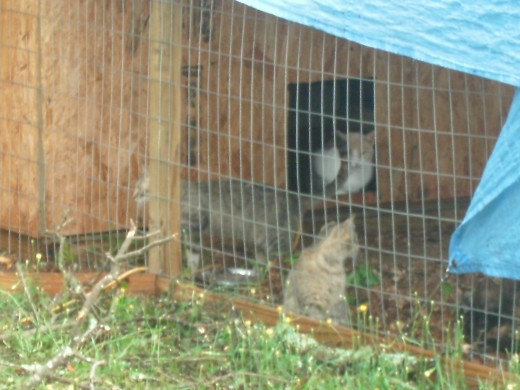 Some of the cats come out to see the aftermath the next day.