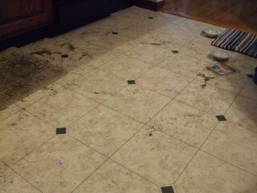 WHAT is all over the kitchen floor !?!?!  Dried, green, miniature grasslike bits....catnip!
