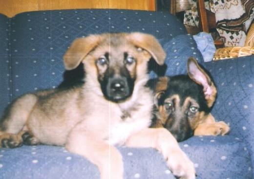 Pups Lobo and Fido