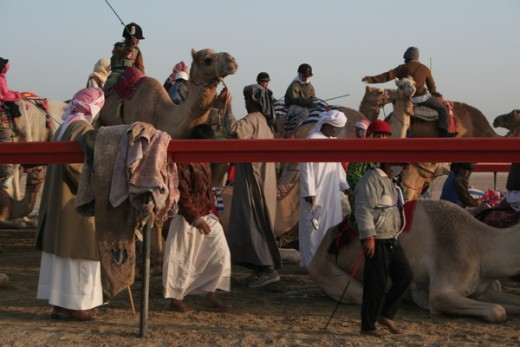 Camel Racing with Child Jockeys - (c) Azure11 2005