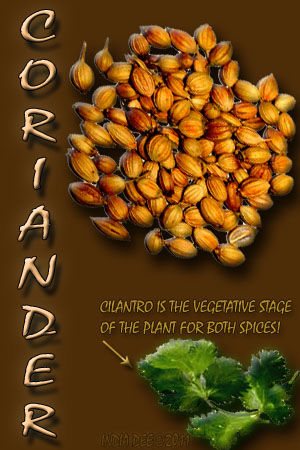 """Coriander and cilantro"" have a relative history!"""