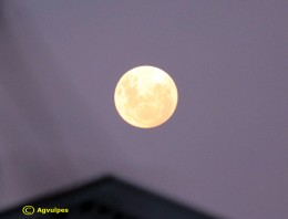 Full Moon ( Super Moon ) The Moon in all of its brilliant splendor - No Eclipse here !!!