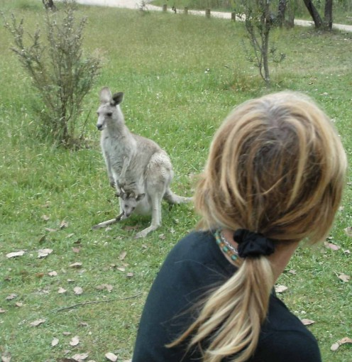 Aussie animals are in your face most of the time - here, in the Snowy Mountains we encounter a curious roo and joey.