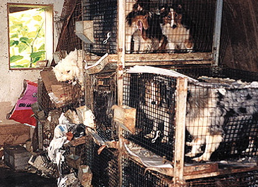 Puppy Mill example